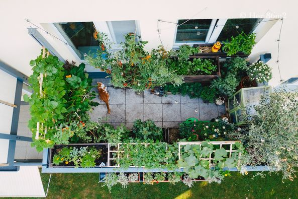 Hình ảnh sân vườn đẹp từ khu vườn 8 mét vuông